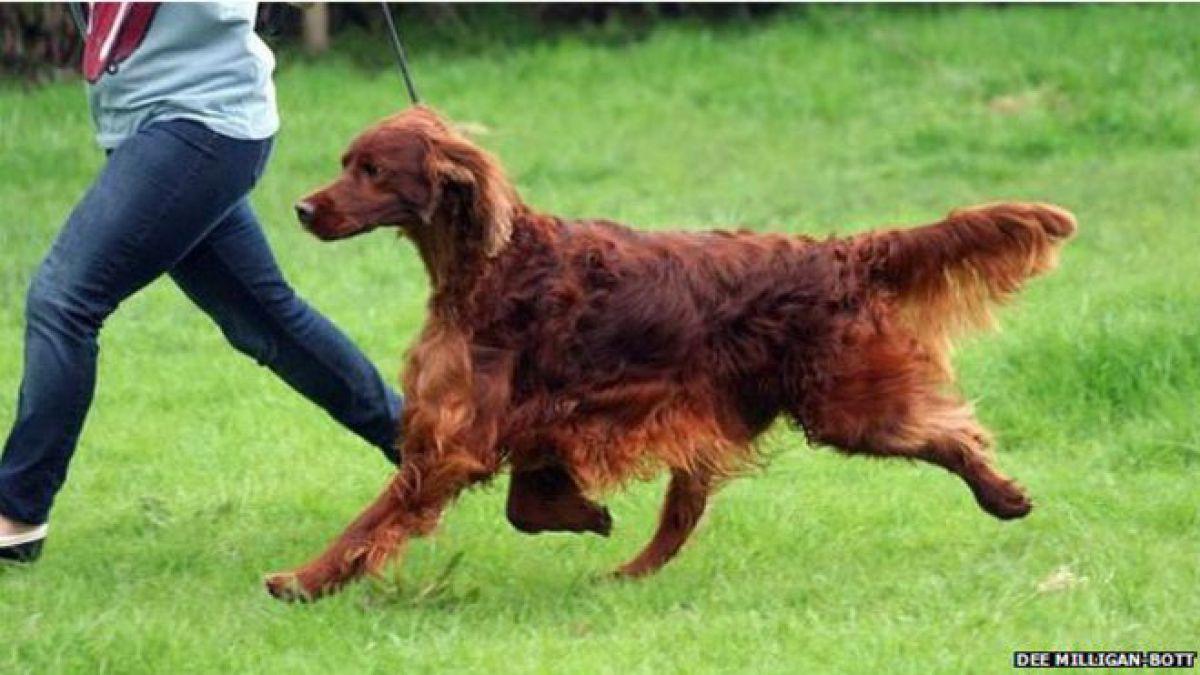 El caso de los perros envenenados que causa polémica en Reino Unido
