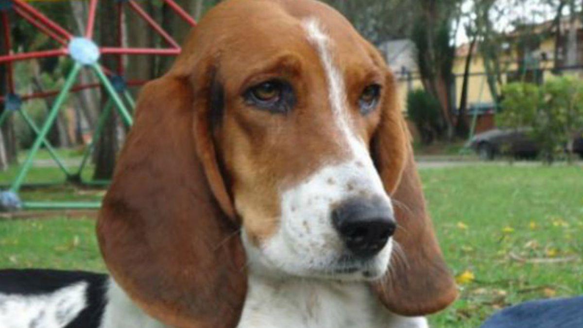 ¿Encontró Colombia su primera raza de perros?