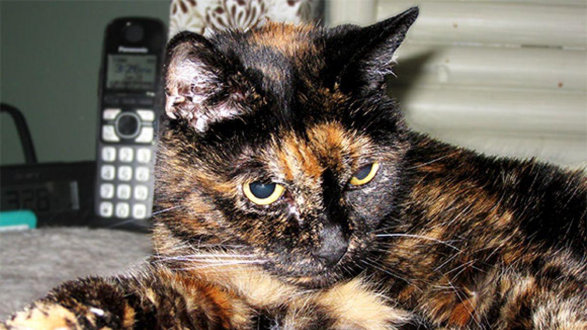Celebran el cumpleaños de la gata más vieja del mundo
