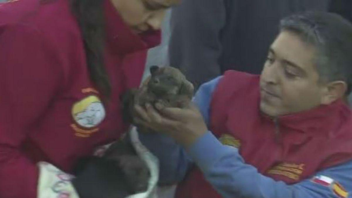 [VIDEO] Revive el emotivo rescate de una perrita y sus cachorros durante el incendio en Valparaíso