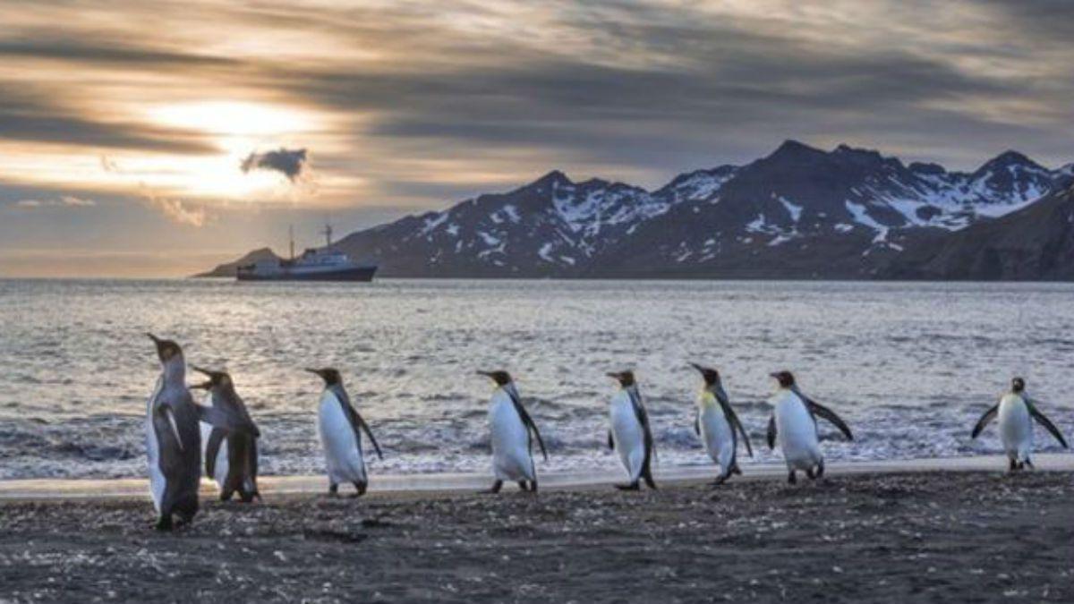 Por qué los pingüinos caminan como patos? | Tele 13