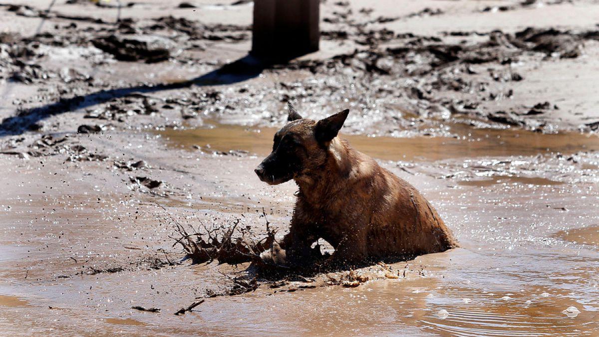 La campaña que busca socorrer a las mascotas del norte