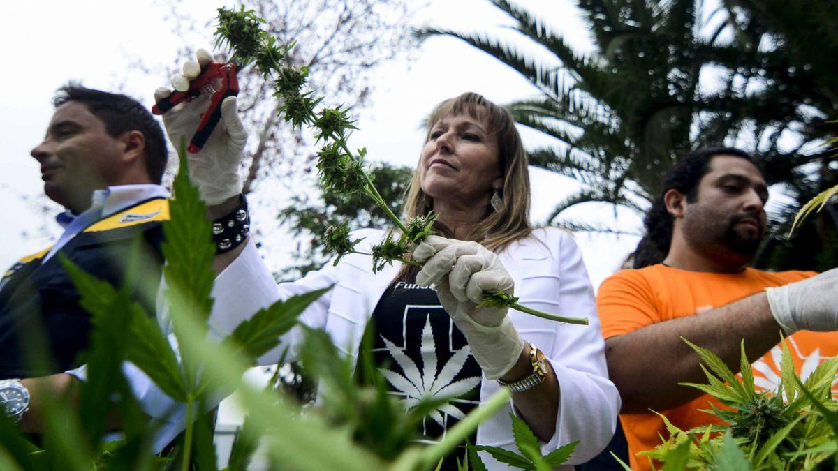 Despenalización de la Marihuana: Fundación Daya llama al Ejecutivo a no restarse del debate
