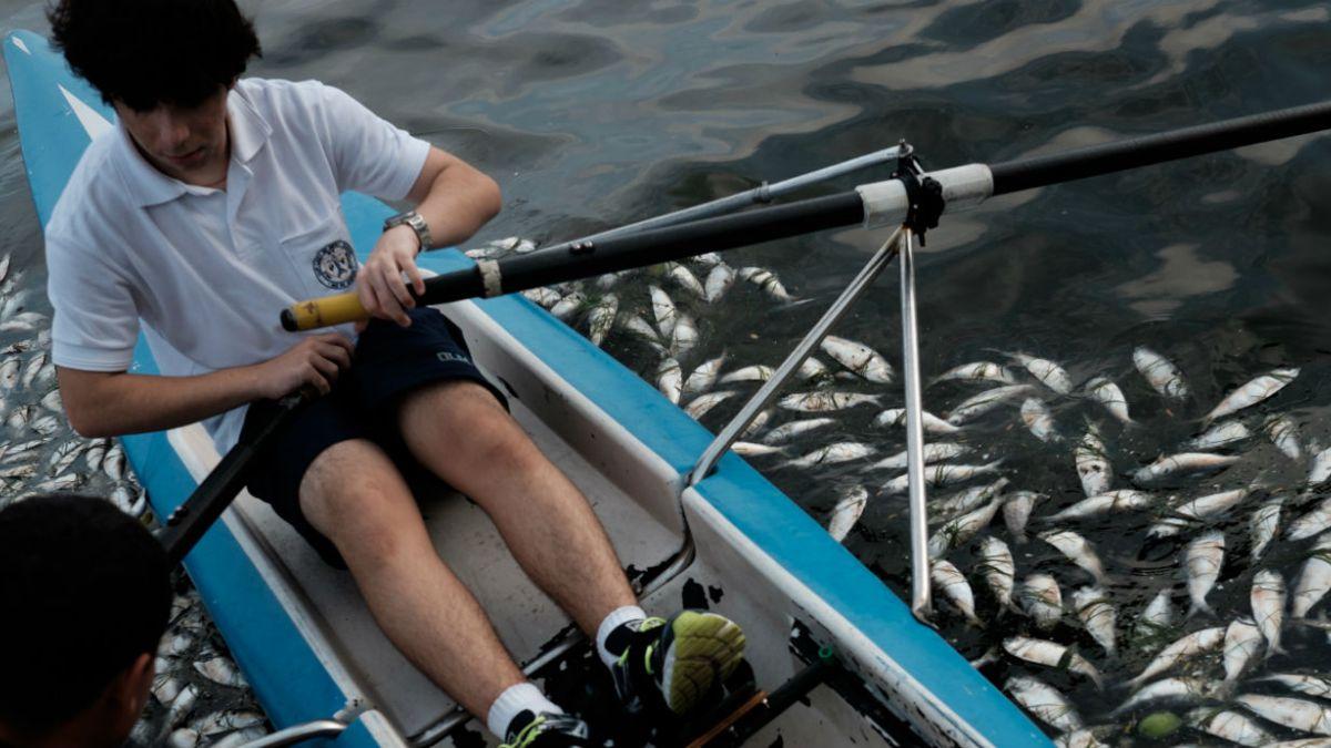 Encuentran toneladas de peces muertos en sede olímpica de la competencia de remo en Brasil