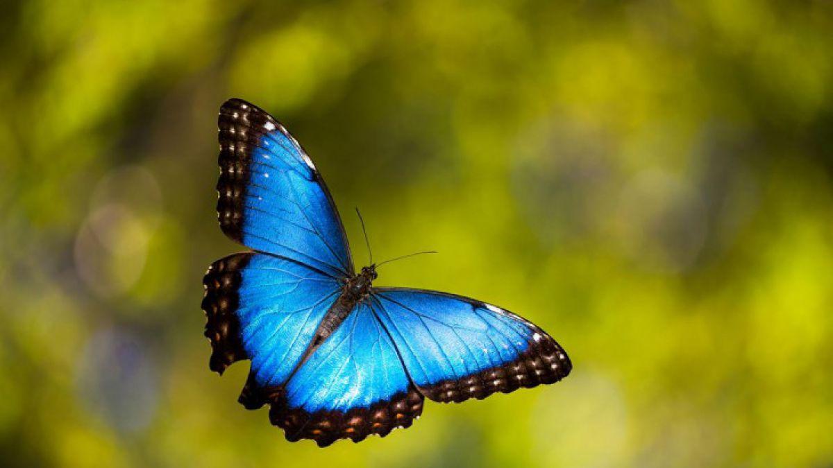 FOTOS 19 espectaculares transformaciones de orugas a mariposas