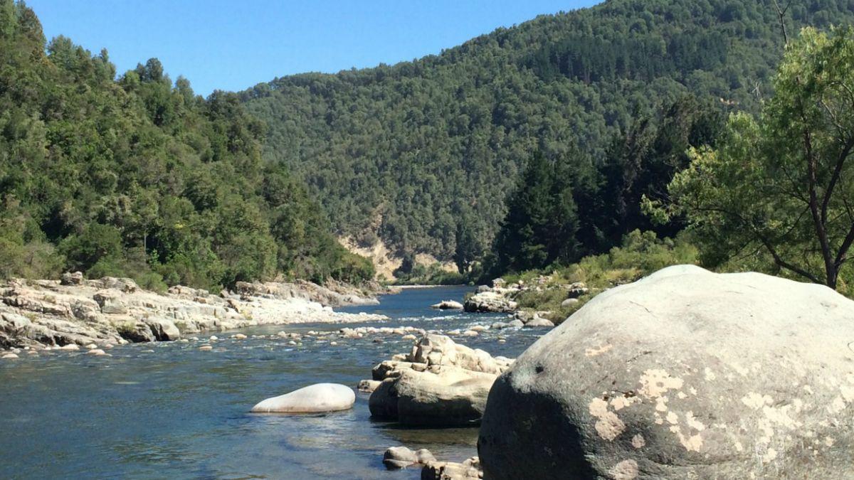 Aprueban nuevo santuario de la naturaleza para chile en el for Noticias naturaleza