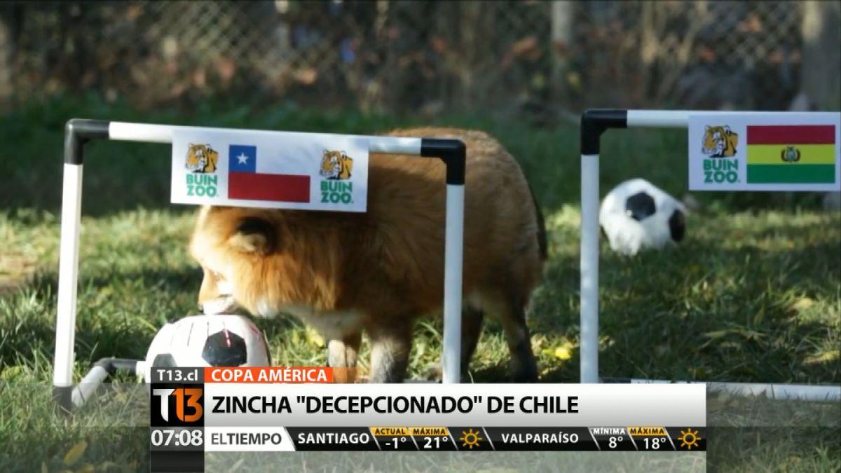 [VIDEO] Zincha del Buin Zoo vaticina empate para duelo de Chile y Bolivia