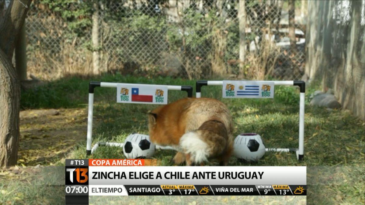 [VIDEO] Zincha del Buin Zoo no duda del ganador del duelo entre Chile y Uruguay