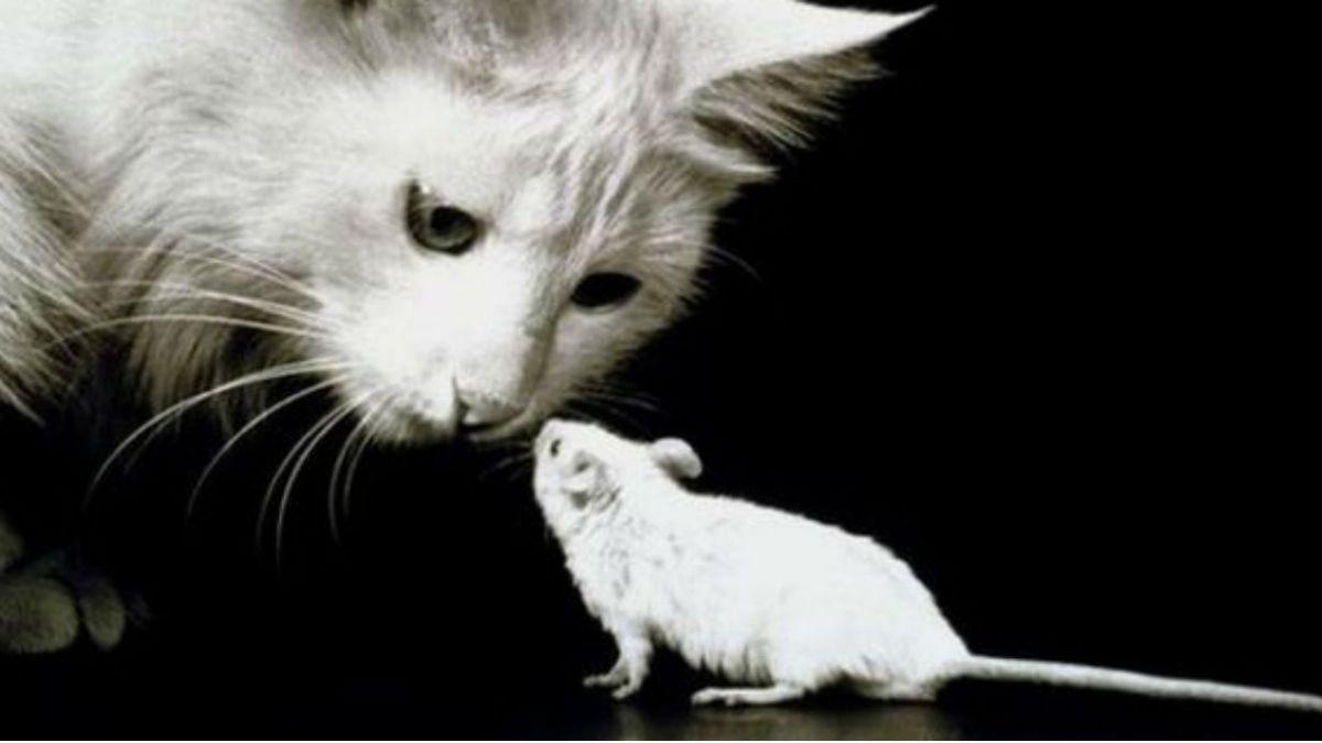 El arma secreta de los gatos para cazar ratones | Tele 13
