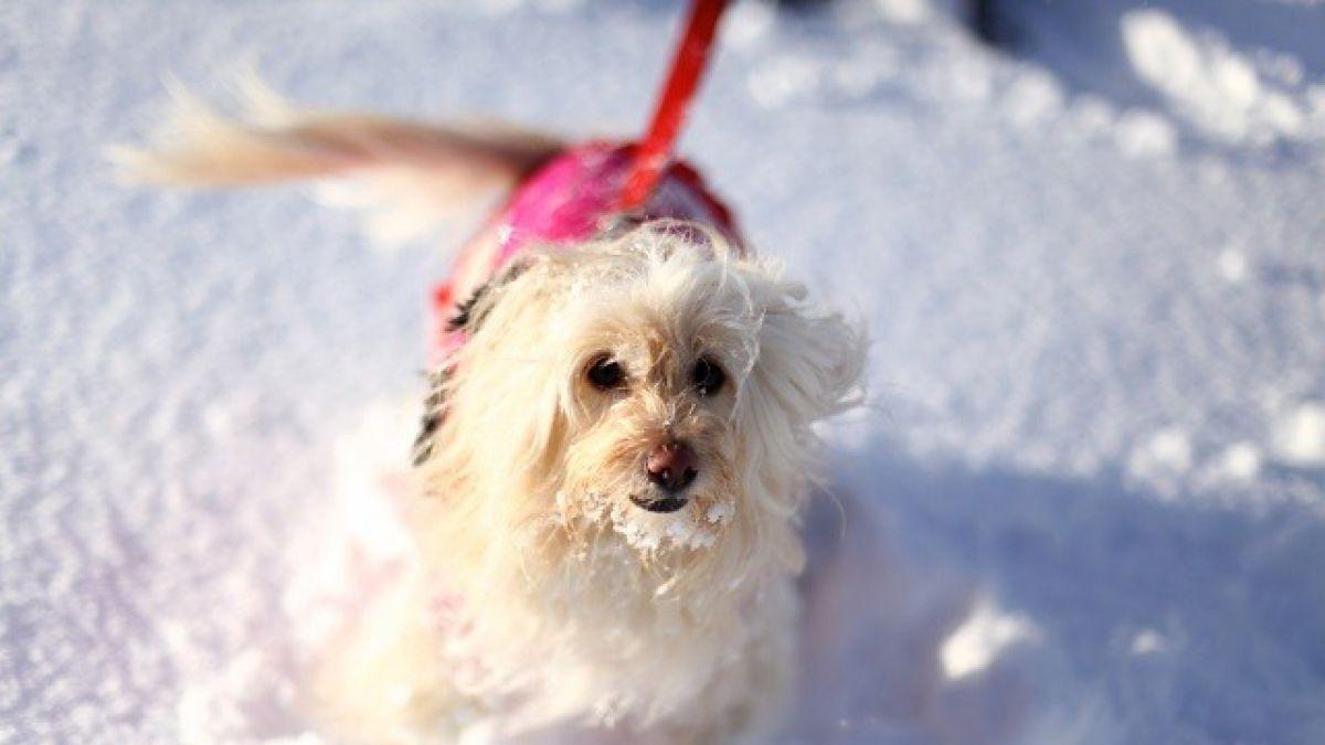 ¿Cómo proteger a tu perro del frío?