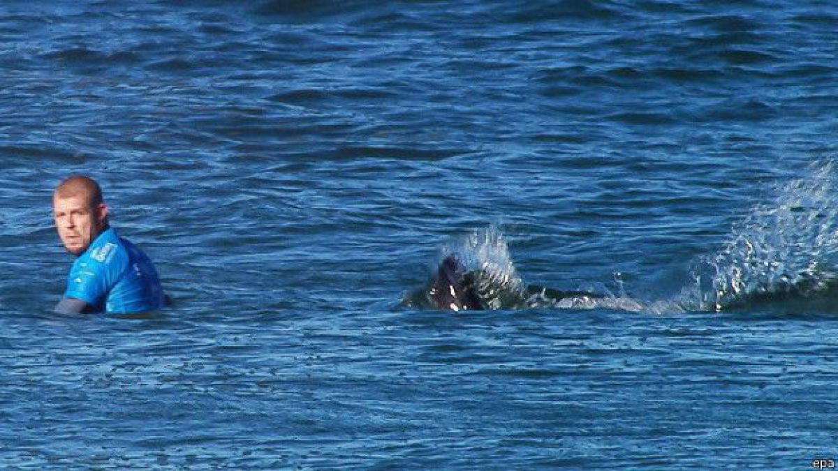 Nominan a premio a surfista que auxilió a compañero atacado por un tiburón