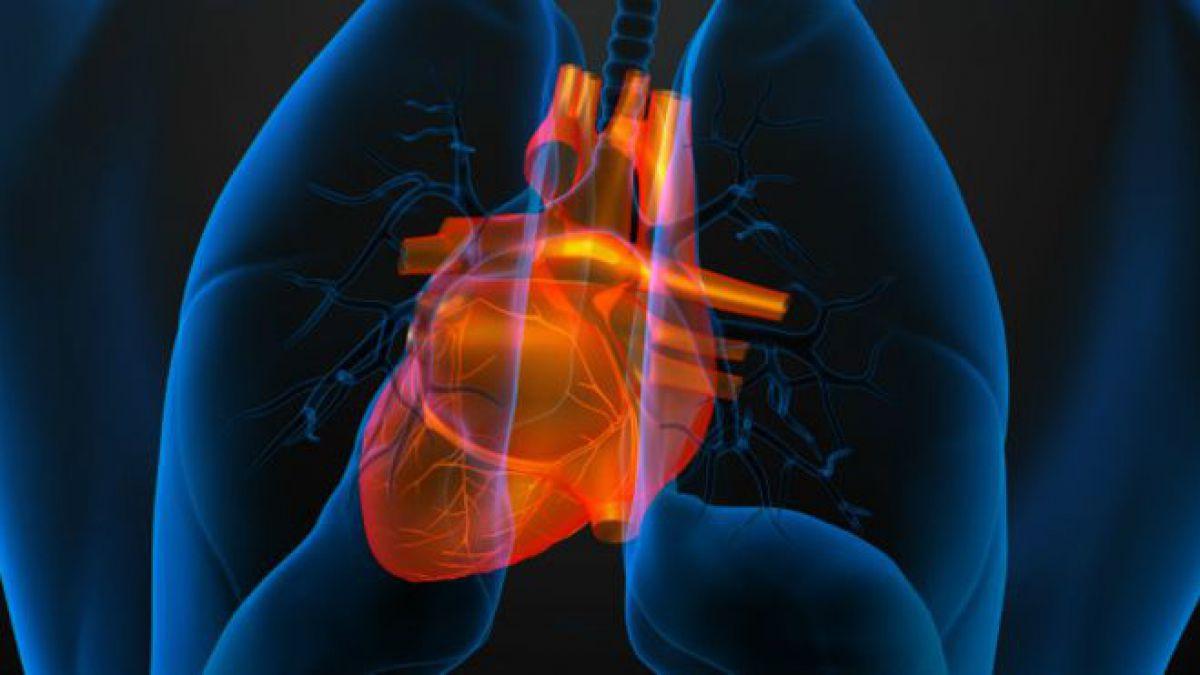Por qué en la mayoría de los adultos el corazón es más viejo | Tele 13