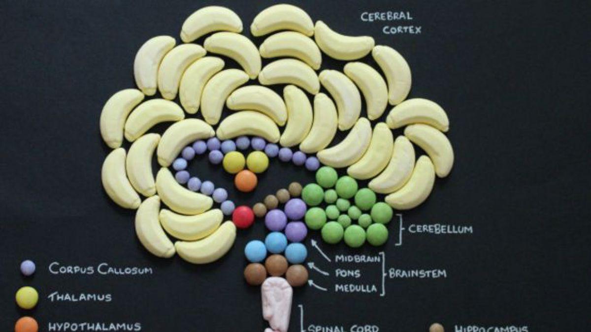 Anatomía de golosinas, el peculiar proyecto de un estudiante | Tele 13
