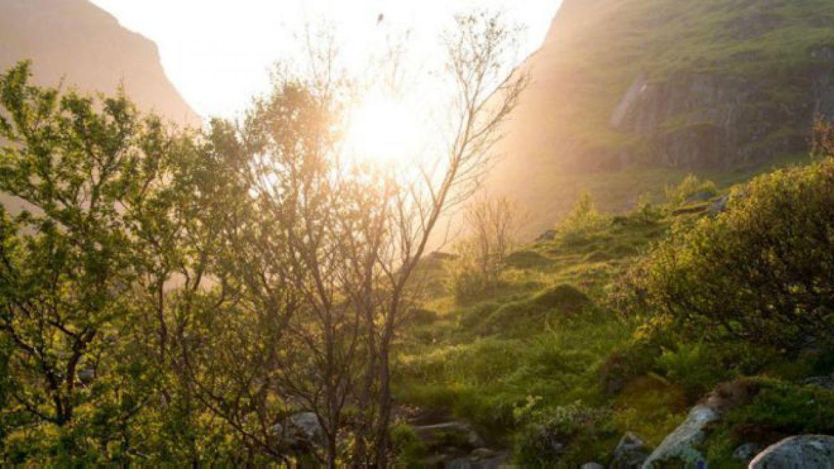 Cómo logró Noruega salvar sus bosques | Tele 13
