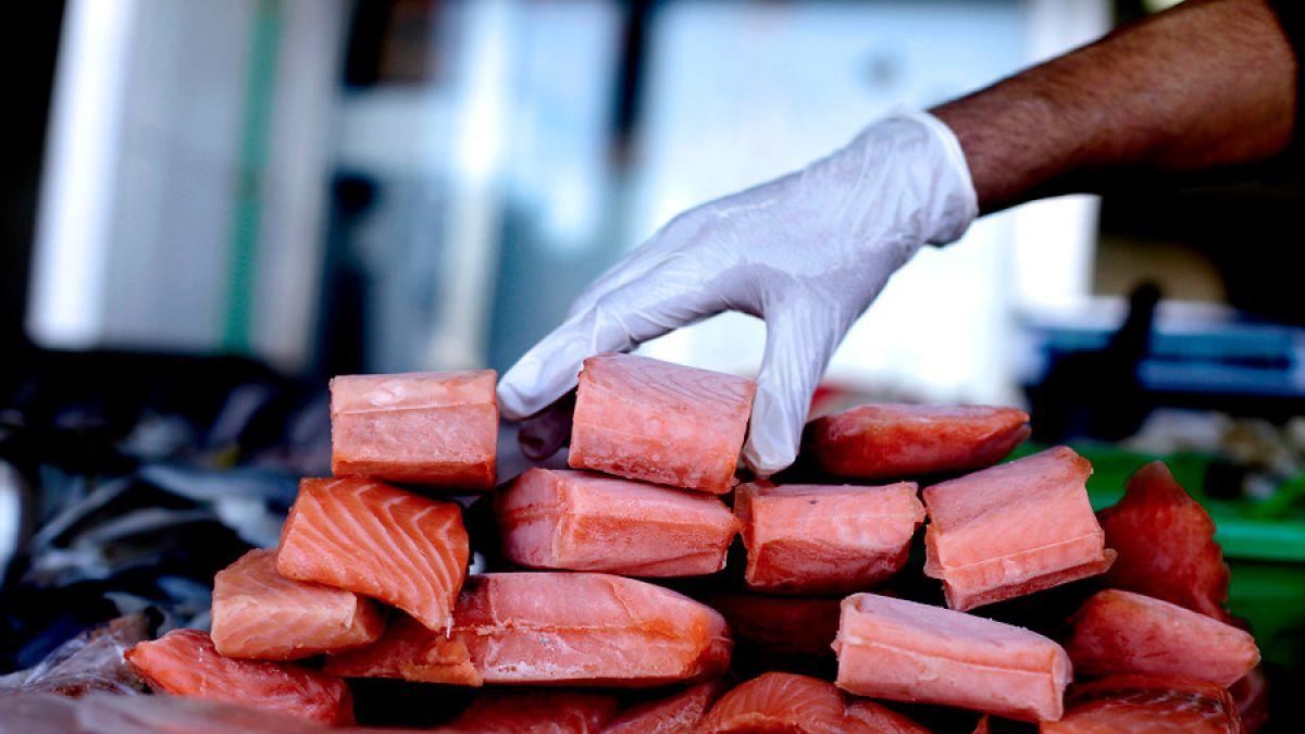 SalmonChile estima 2.000 puestos de trabajo menos para 2016