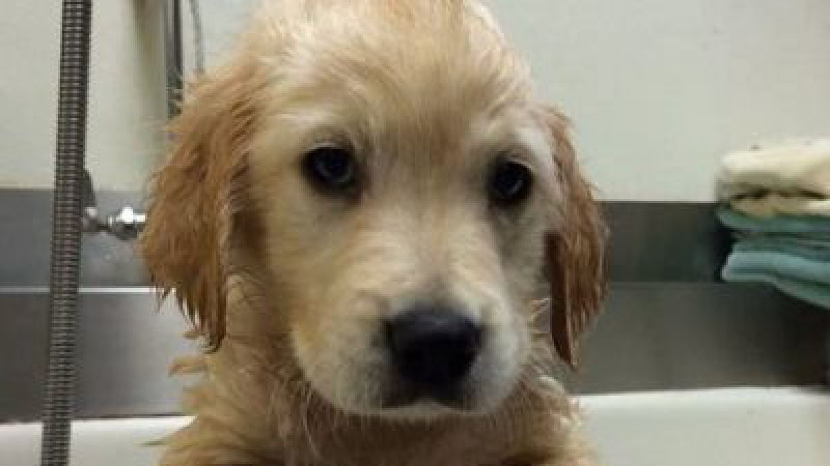 POLÉMICA: La foto de este cachorro usando frenillos a dado la vuelta al mundo - Imagen 1