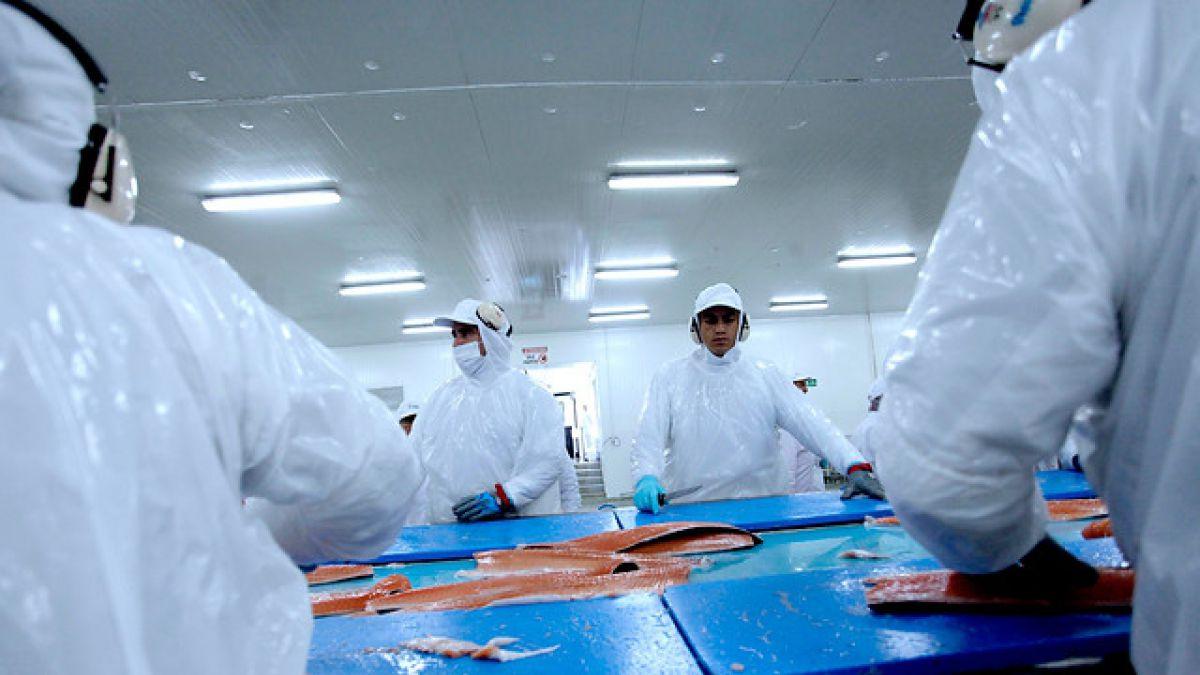 Gobierno anuncia medidas para mitigar mortalidad de salmones por proliferación de alga