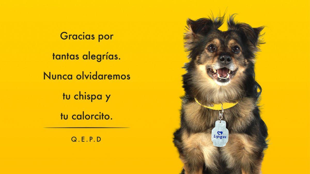 Chile De Luto Muere Spike El Querido Perro De Lipigas