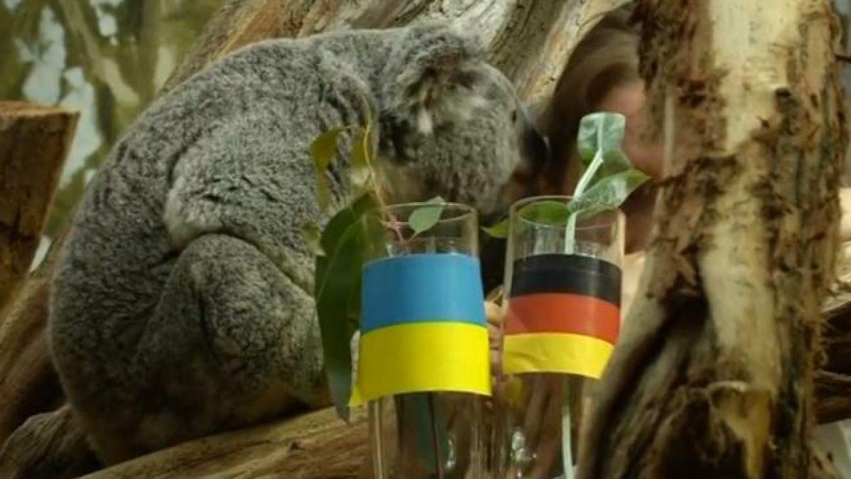 Eurocopa 2016: Los zoológicos alemanes están en la búsqueda del nuevo pulpo Paul