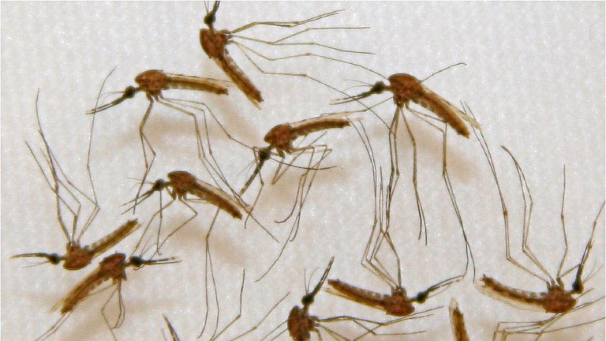 Confirman caso de paciente con Malaria en Arica