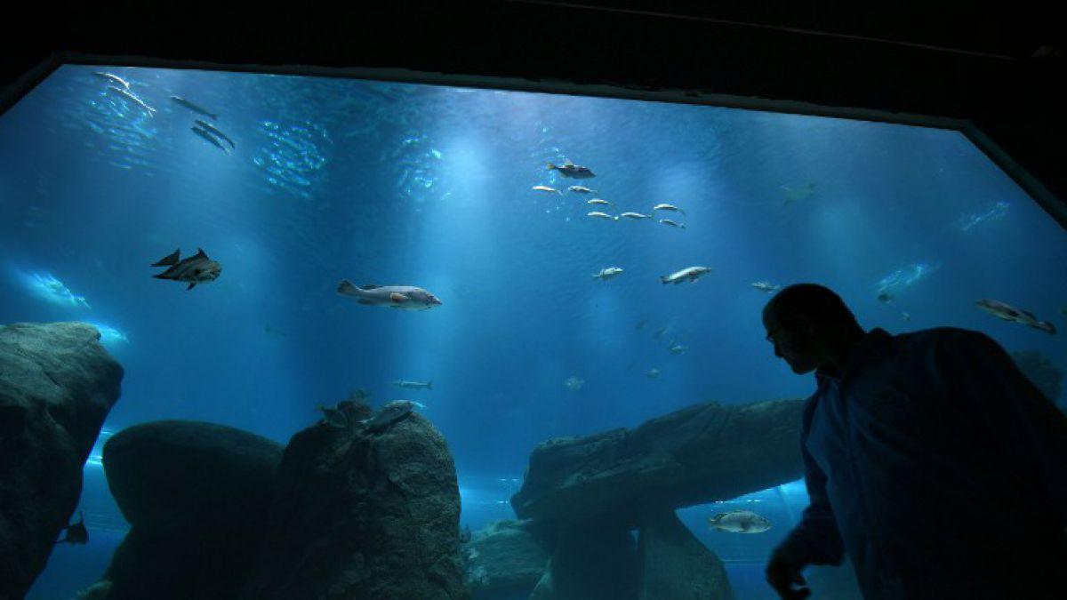 Rio inaugura el acuario m s grande de sudam rica tele 13 for Acuarios zona norte