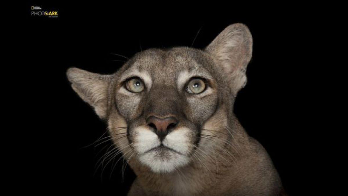 El Arca de Joel: el fotógrafo que quiere fotografiar a todos los animales de los zoológicos