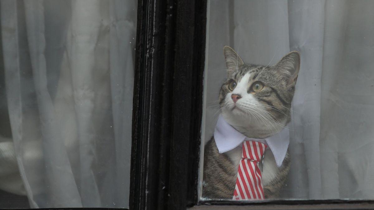 De terno y corbata: El gato de Julian Assange se roba las