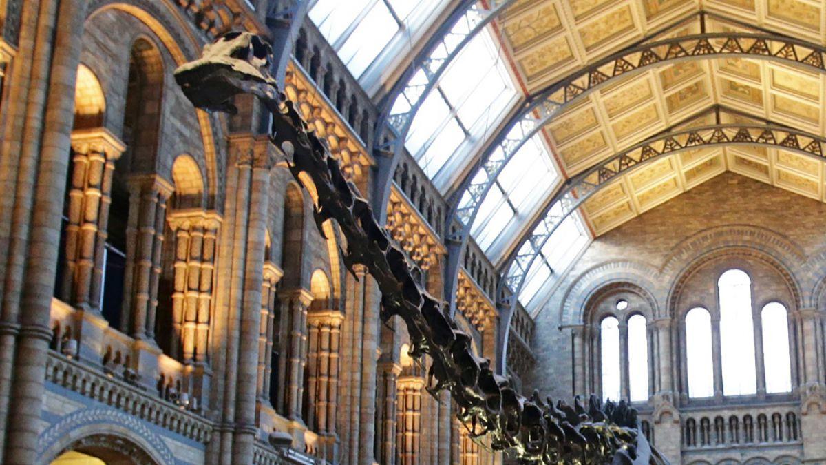Resultado de imagen para Museo de Historia Natural de Londres dice adiós a su famoso dinosaurio