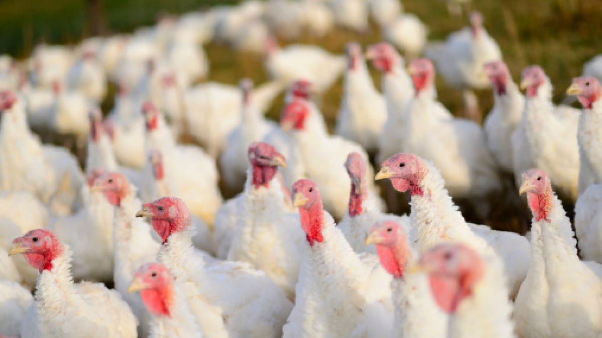 Sopraval detecta nuevo foco de gripe aviar: esta vez en planta de Nogales