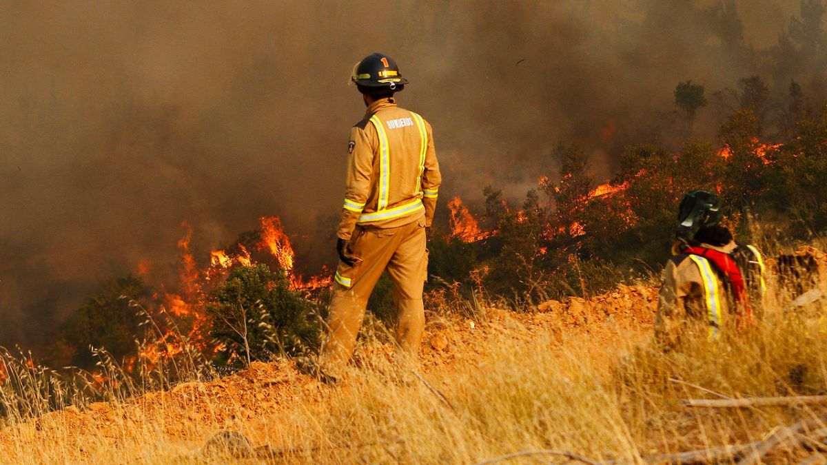 Bomberos y Conaf trabajan en la contención de incendio forestal en Cabrero