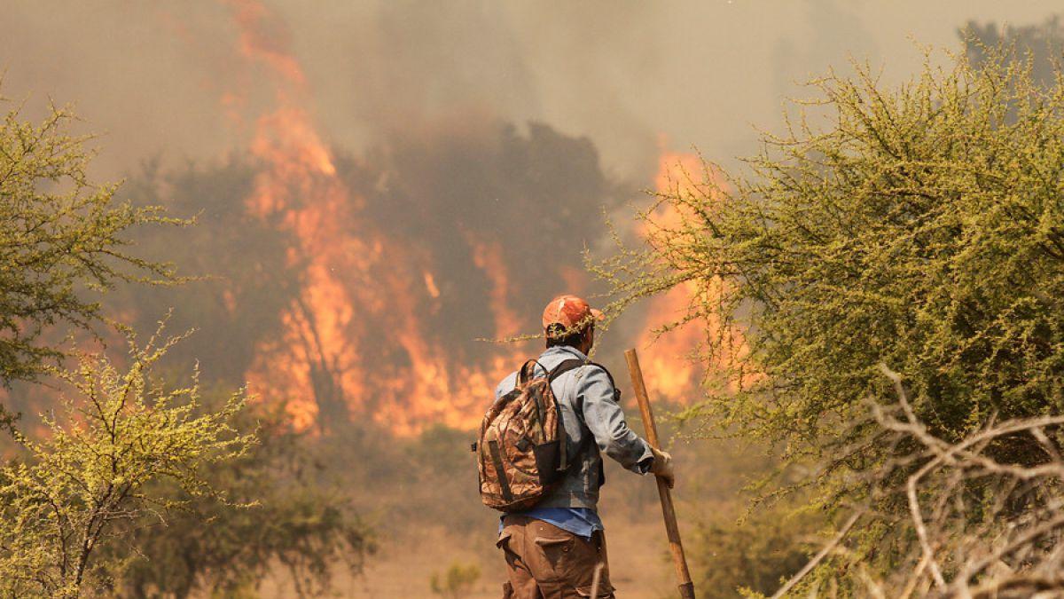 Incendios forestales: van 21 detenidos desde el 1 de enero