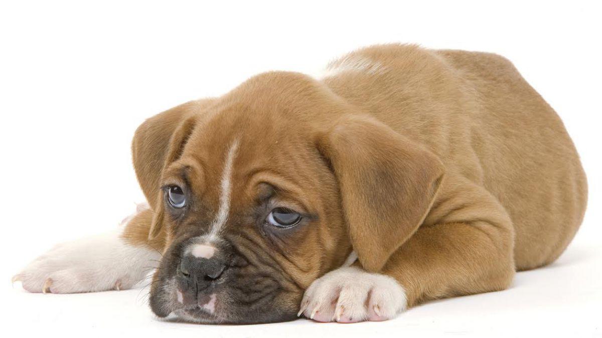 Los Alimentos Que Pueden Ser Mortales Para Tu Perro Tele 13