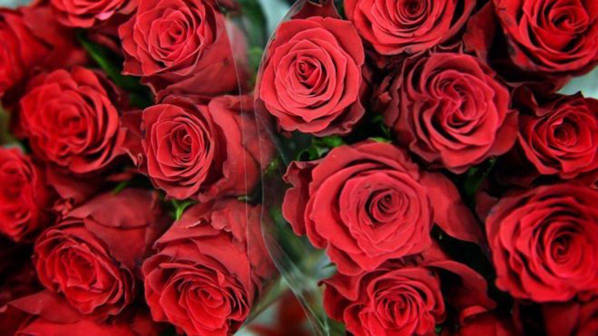 5 De Las Flores Mas Raras Hermosas Y Hasta Peligrosas Del Mundo
