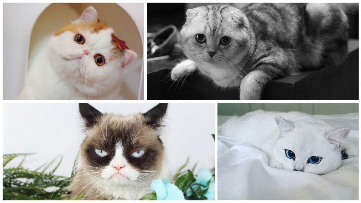Conoce Los 10 Gatos Más Famosos En Instagram