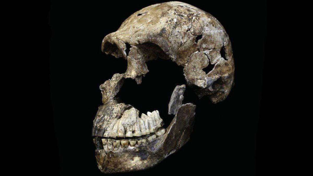 Revelan datos sobre la especie humana ancestral