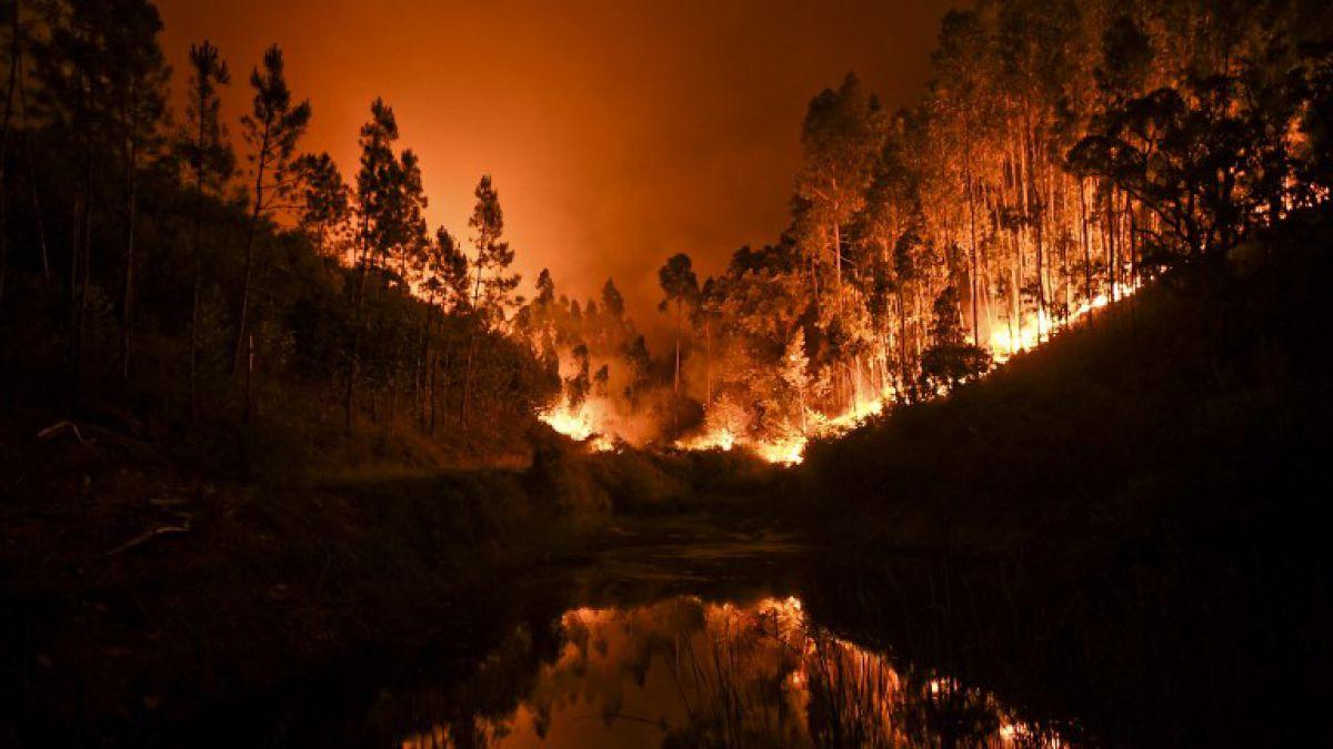 Incendio forestal en portugal deja m s de 60 muertos tele 13 - Que hay en portugal ...