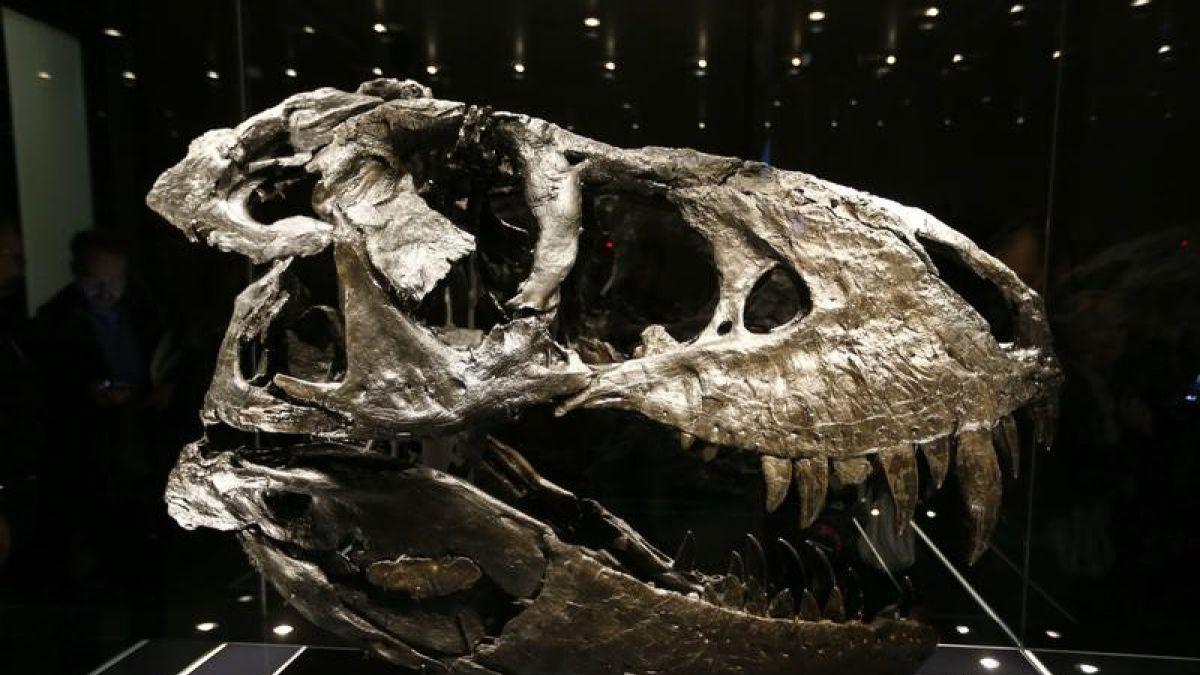 El Temible Tiranosaurio No Hubiera Podido Cazar A Un Ser