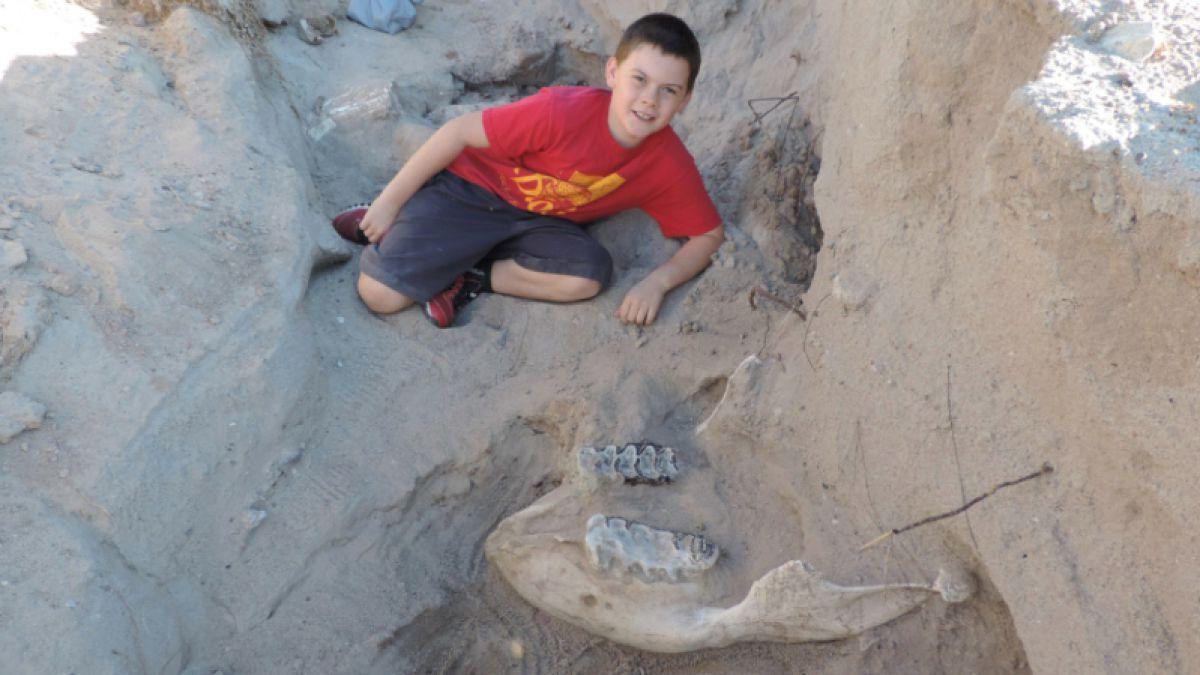 Tropieza niño con fósil de 1.2 millones de años