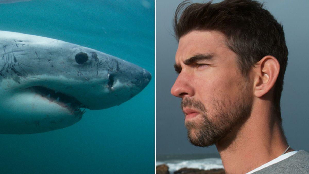 Michael Phelps y otros decepcionantes duelos entre hombres y animales