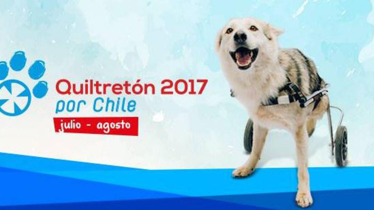 Fundación Quiltrería busca fondos para primer Centro de Cuidados y Rehabilitación de Animales