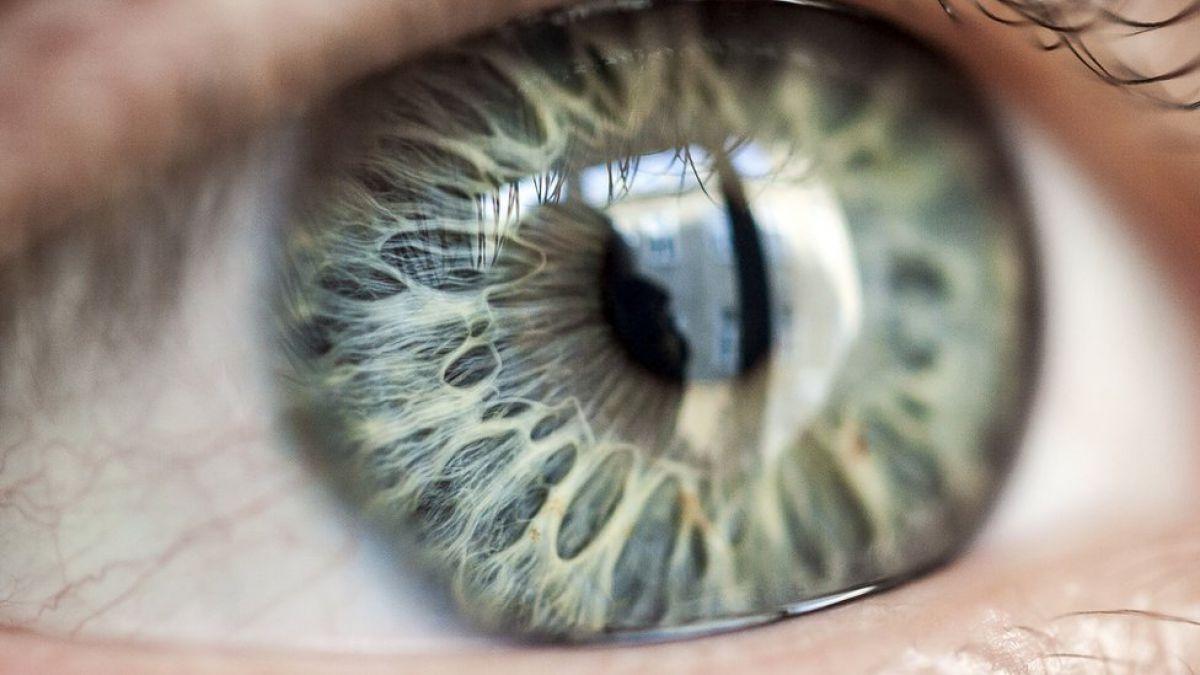 Optografía: cuando los fisiólogos creían que los ojos guardaban la ...