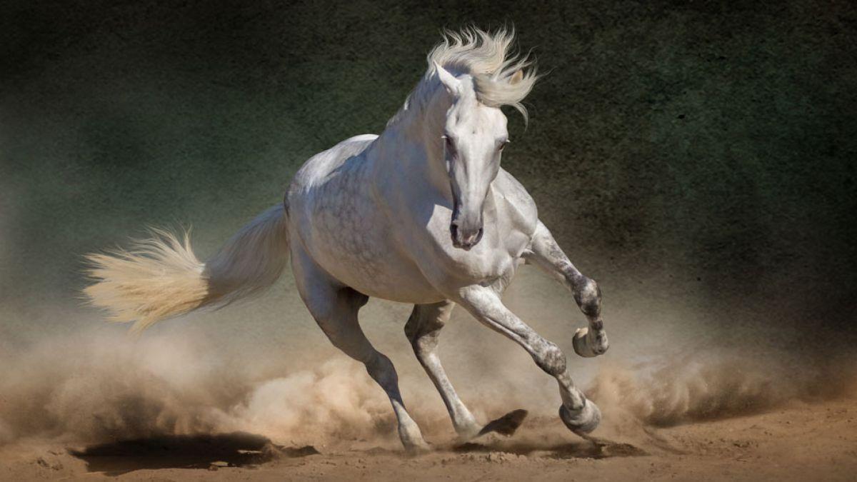 Fotos de asnos y caballos 23
