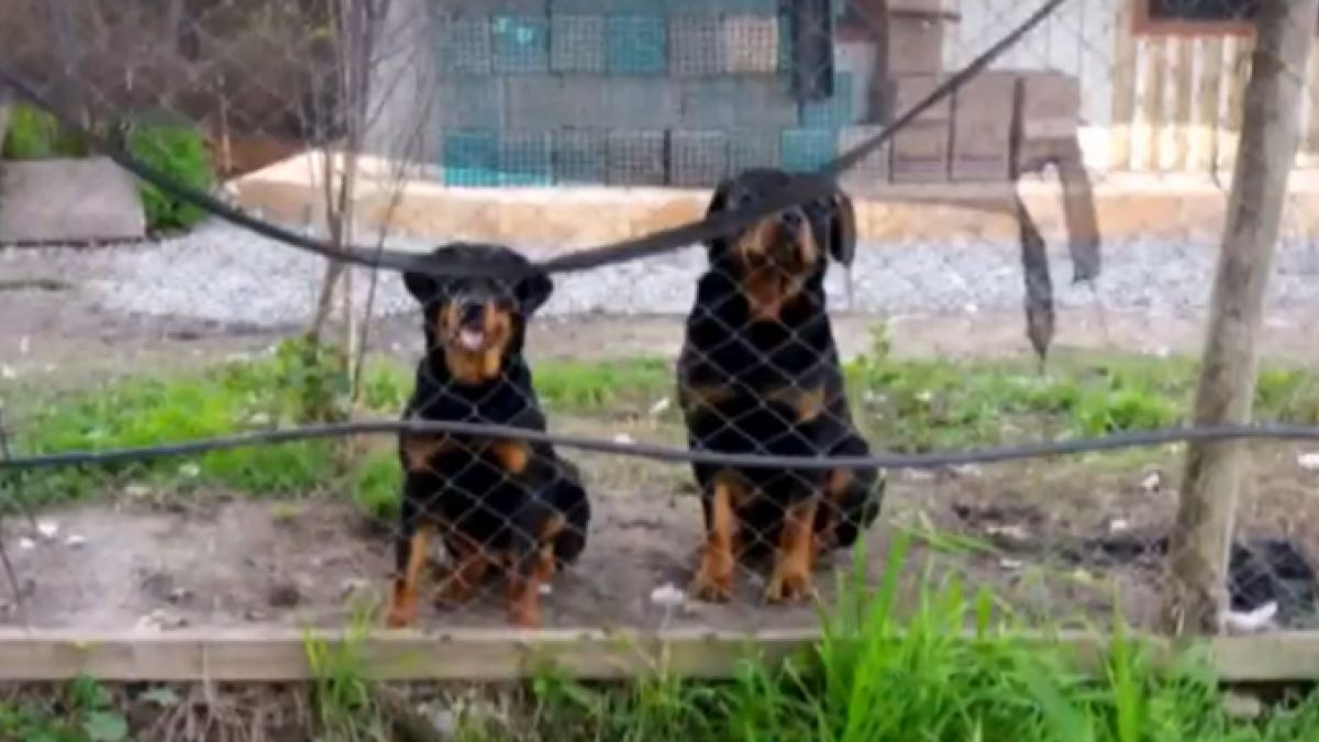 Perros Rottweiler matan a mujer de 81 años en El Monte