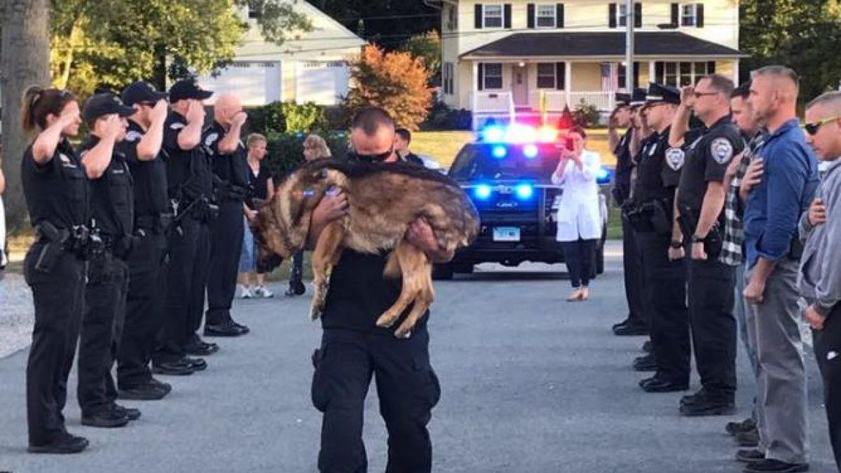Emotivo homenaje de despedida a un perro policía con cáncer