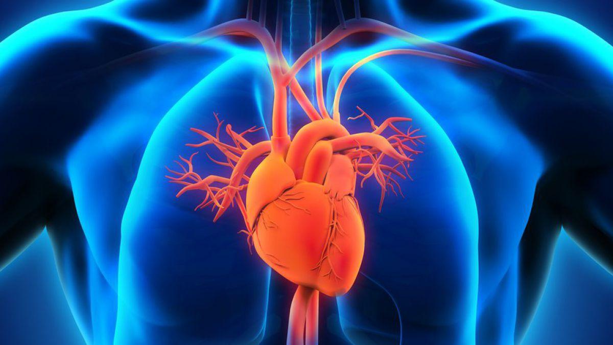 Por qué tenemos el corazón inclinado hacia la izquierda? | Tele 13
