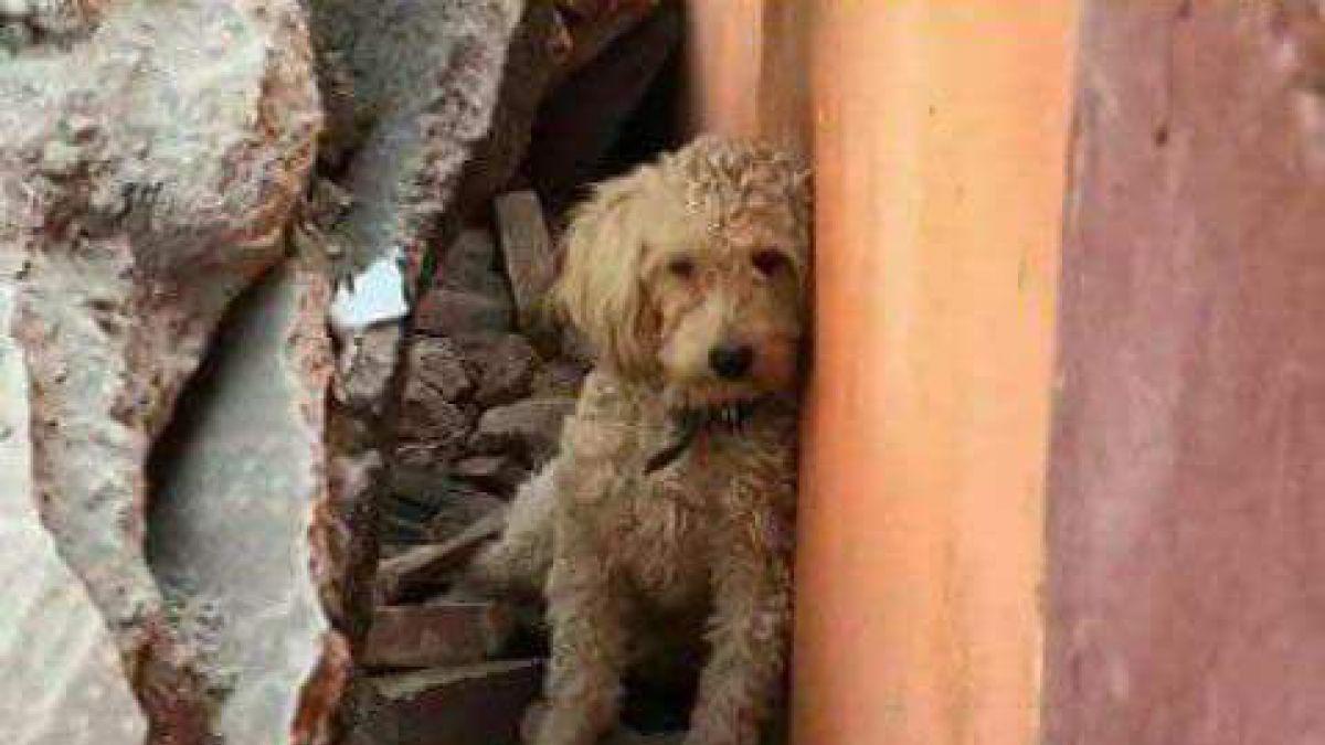 Así puedes localizar mascotas extraviadas tras el sismo de ayer