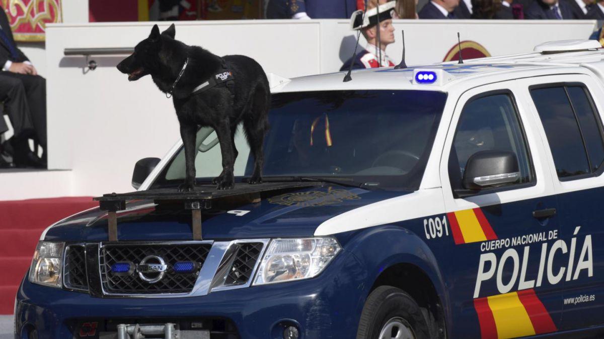 Desfile de la Fiesta Nacional confirma que los españoles también aman los perros