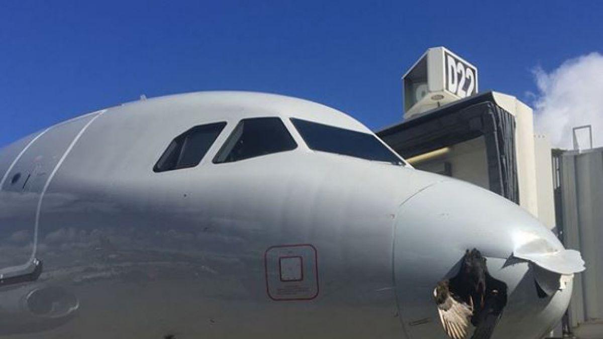 Pájaro se estrella contra avión de pasajeros y queda incrustado, en Miami