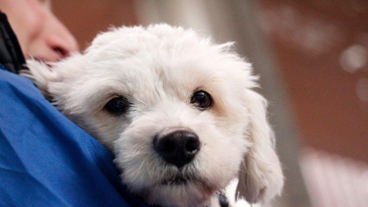 Minsal revierte medida sobre tenencia de mascotas en viviendas