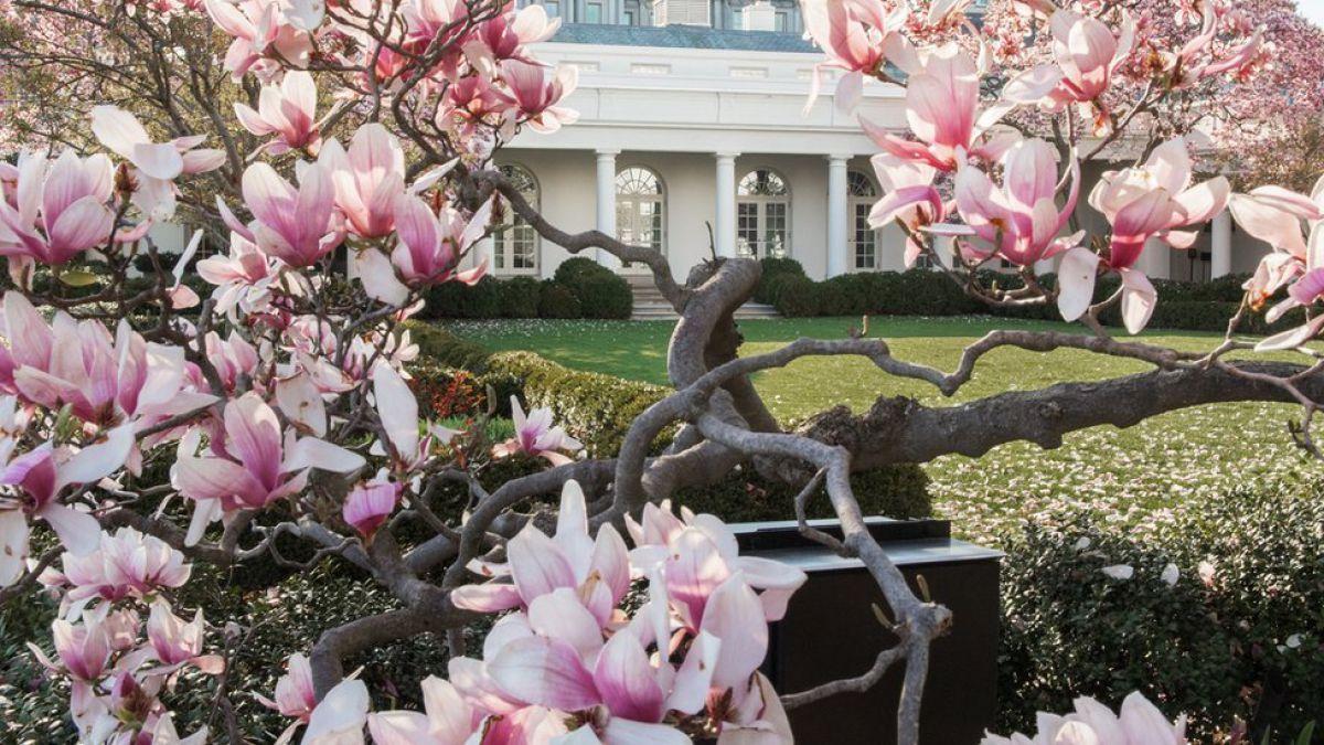 Melania Trump manda cortar histórico árbol de la Casa Blanca